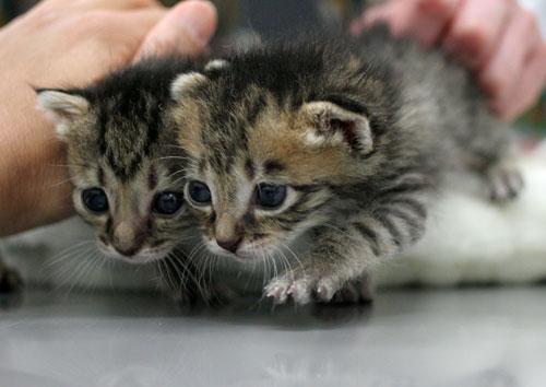 赤ちゃん猫★ご帰宅_d0355333_16495040.jpg