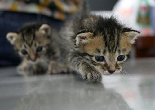 赤ちゃん猫★ご帰宅_d0355333_16495054.jpg