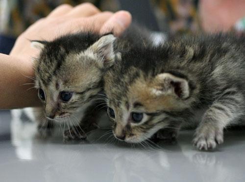 赤ちゃん猫★ご帰宅_d0355333_16495068.jpg
