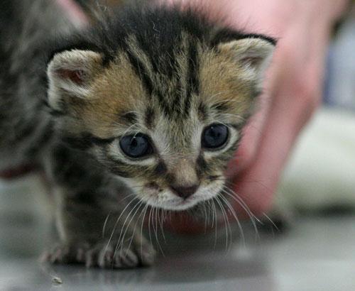 赤ちゃん猫★ご帰宅_d0355333_16495135.jpg
