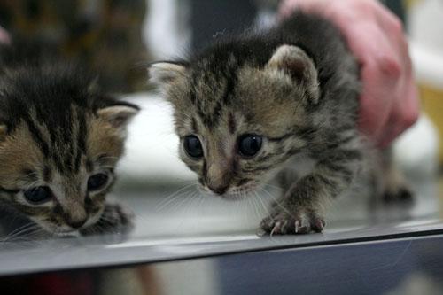 赤ちゃん猫★ご帰宅_d0355333_16495145.jpg