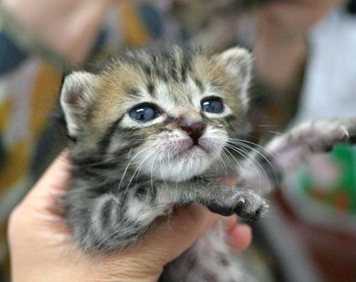 赤ちゃん猫★ご帰宅_d0355333_16495169.jpg