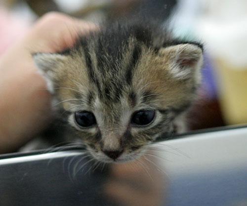 赤ちゃん猫★ご帰宅_d0355333_16495191.jpg