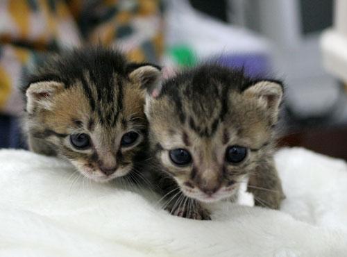 赤ちゃん猫★ご帰宅_d0355333_16495208.jpg