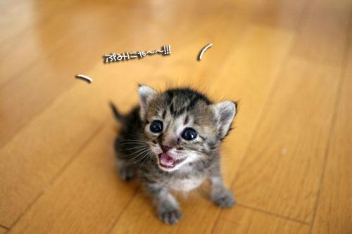 赤ちゃん猫★探検ちう!_d0355333_16500516.jpg