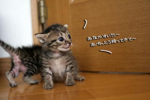 赤ちゃん猫★探検ちう!_d0355333_16500557.jpg