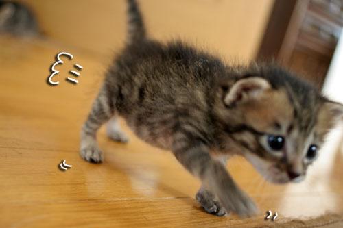 赤ちゃん猫★探検ちう!_d0355333_16500572.jpg