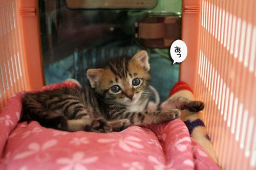 赤ちゃん猫★探検ちう!_d0355333_16500611.jpg