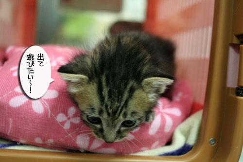 赤ちゃん猫★探検ちう!_d0355333_16500662.jpg