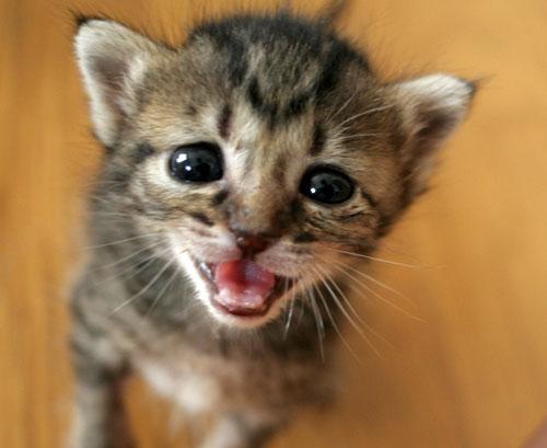 赤ちゃん猫★探検ちう!_d0355333_16500668.jpg