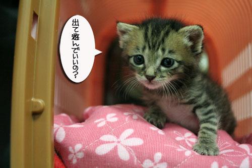 赤ちゃん猫★探検ちう!_d0355333_16500679.jpg