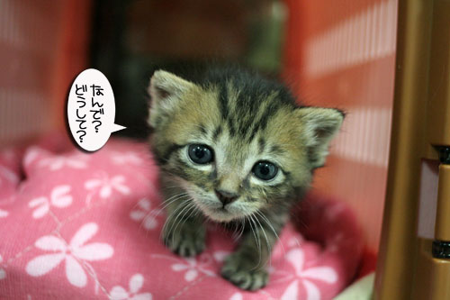 赤ちゃん猫★探検ちう!_d0355333_16500684.jpg