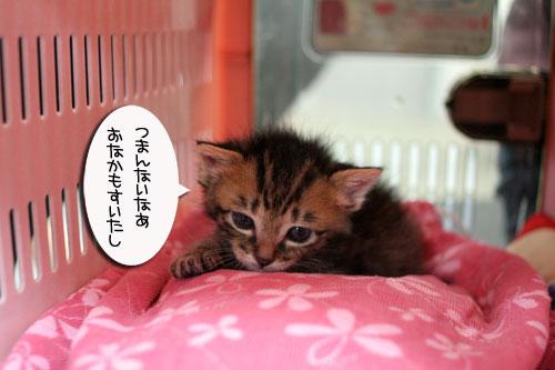 赤ちゃん猫★探検ちう!_d0355333_16500723.jpg
