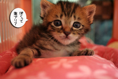 赤ちゃん猫★探検ちう!_d0355333_16500749.jpg