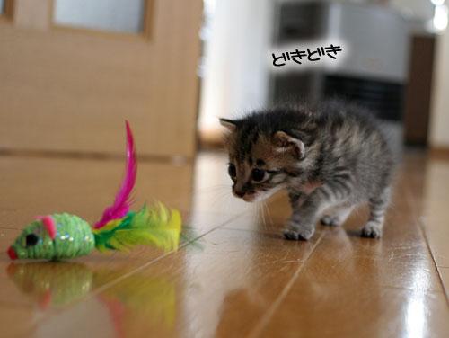 赤ちゃん猫★食う寝る遊ぶ_d0355333_16500860.jpg
