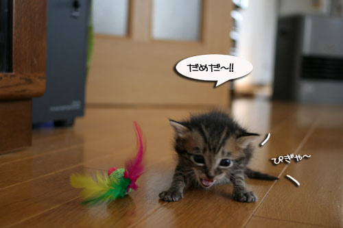 赤ちゃん猫★食う寝る遊ぶ_d0355333_16500864.jpg