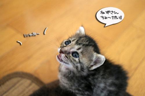 赤ちゃん猫★食う寝る遊ぶ_d0355333_16500873.jpg
