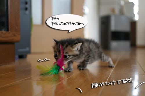 赤ちゃん猫★食う寝る遊ぶ_d0355333_16500894.jpg