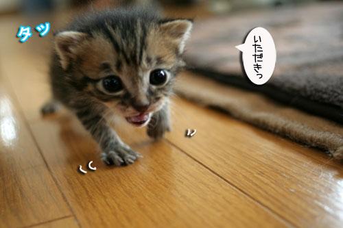 赤ちゃん猫★食う寝る遊ぶ_d0355333_16500896.jpg