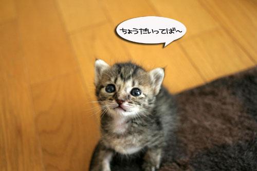 赤ちゃん猫★食う寝る遊ぶ_d0355333_16500899.jpg