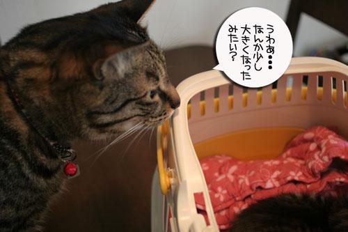 赤ちゃん猫★食う寝る遊ぶ_d0355333_16500910.jpg