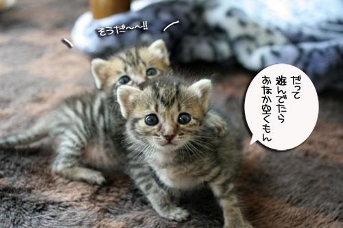 赤ちゃん猫★食う寝る遊ぶ_d0355333_16500914.jpg