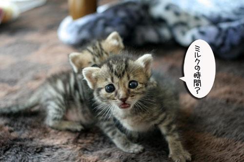 赤ちゃん猫★食う寝る遊ぶ_d0355333_16500933.jpg