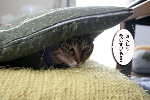 赤ちゃん猫★食う寝る遊ぶ_d0355333_16500960.jpg