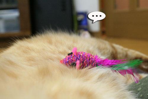 赤ちゃん猫★食う寝る遊ぶ_d0355333_16501176.jpg