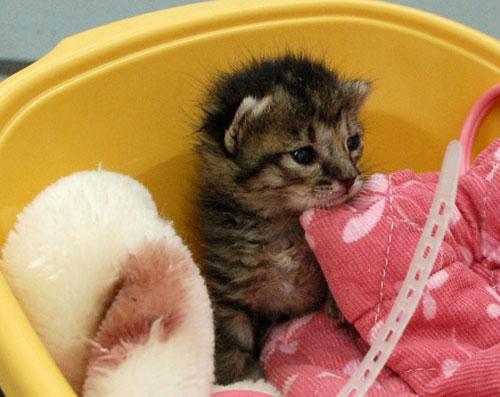 赤ちゃん猫★思い出写真館その1_d0355333_16502953.jpg