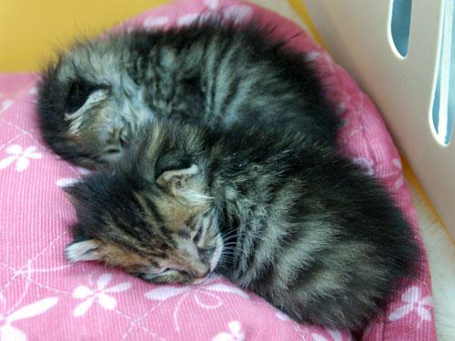 赤ちゃん猫★思い出写真館その1_d0355333_16502974.jpg