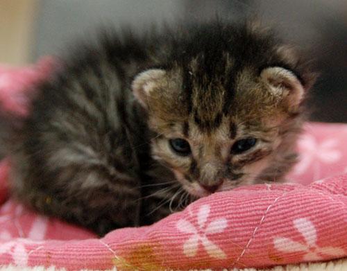 赤ちゃん猫★思い出写真館その1_d0355333_16503027.jpg