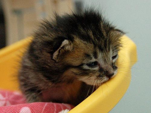 赤ちゃん猫★思い出写真館その1_d0355333_16503039.jpg