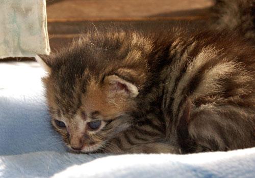 赤ちゃん猫★思い出写真館その1_d0355333_16503045.jpg