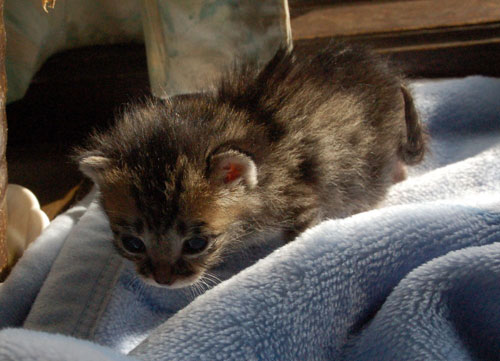 赤ちゃん猫★思い出写真館その1_d0355333_16503057.jpg