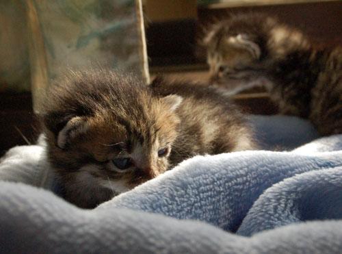 赤ちゃん猫★思い出写真館その1_d0355333_16503087.jpg