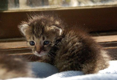 赤ちゃん猫★思い出写真館その1_d0355333_16503093.jpg