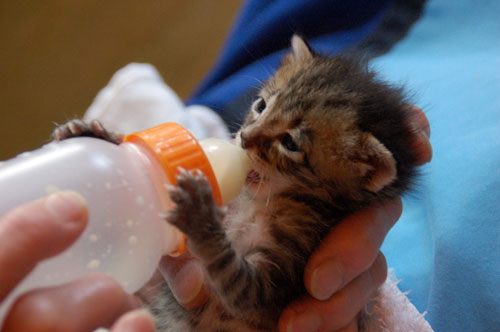 赤ちゃん猫★思い出写真館その3_d0355333_16503709.jpg