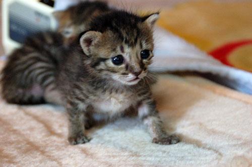 赤ちゃん猫★思い出写真館その3_d0355333_16503808.jpg
