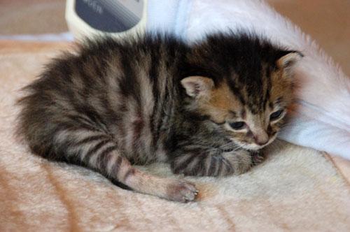 赤ちゃん猫★思い出写真館その3_d0355333_16503863.jpg