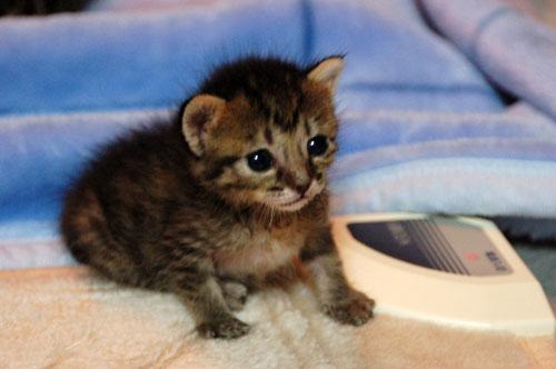 赤ちゃん猫★思い出写真館その3_d0355333_16503898.jpg