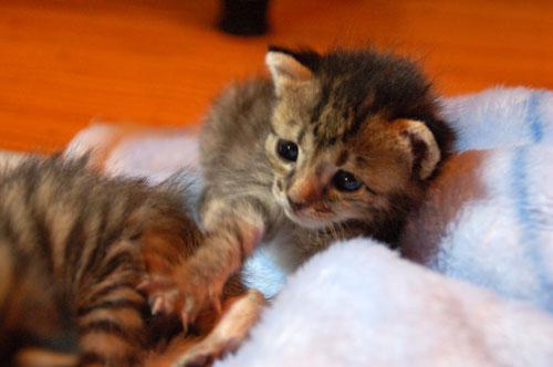 赤ちゃん猫動画付き★思い出写真館その4_d0355333_16504232.jpg