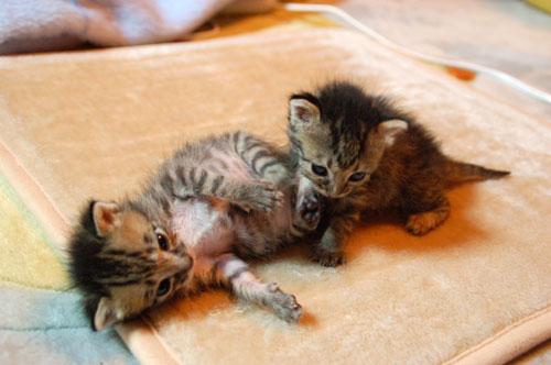 赤ちゃん猫動画付き★思い出写真館その4_d0355333_16504382.jpg