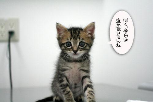 赤ちゃん猫動画2本立て★病院なんか怖くない?_d0355333_16510345.jpg