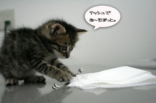 赤ちゃん猫動画2本立て★病院なんか怖くない?_d0355333_16510410.jpg