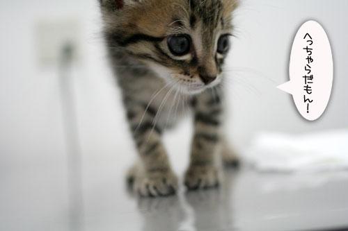 赤ちゃん猫動画2本立て★病院なんか怖くない?_d0355333_16510459.jpg