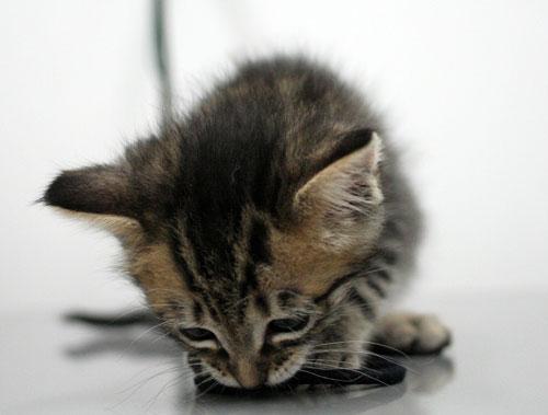 赤ちゃん猫動画2本立て★病院なんか怖くない?_d0355333_16510568.jpg