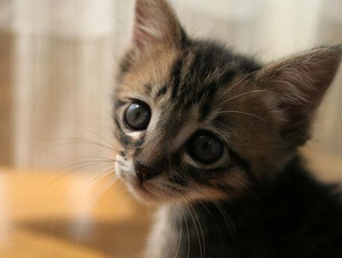 子猫と一緒にのんびり休日_d0355333_16512614.jpg