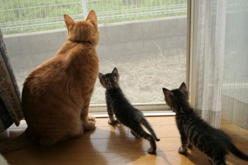 子猫と一緒にのんびり休日_d0355333_16512653.jpg