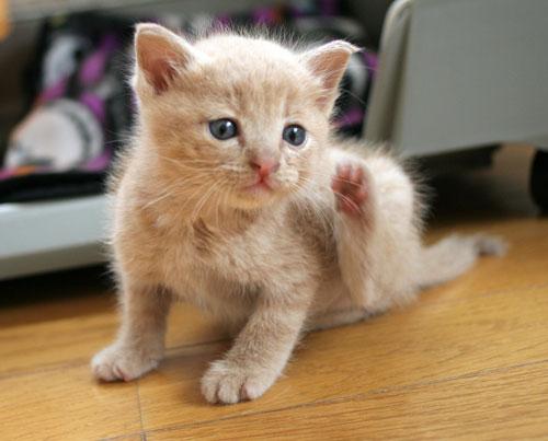 子猫と一緒にのんびり休日_d0355333_16512728.jpg